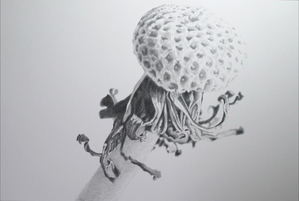 painting in graphite drawing entitled Pusteblume ohne Samen